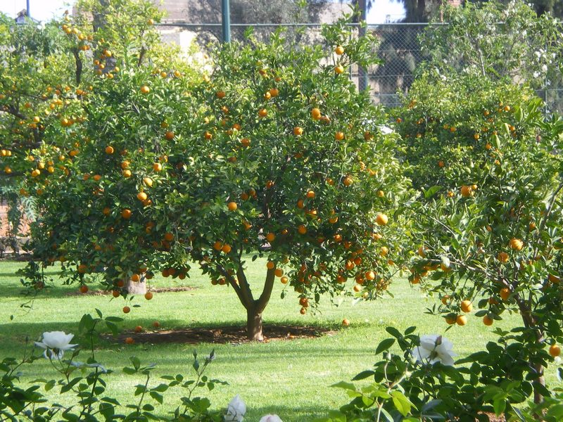 Jardinier expérimenté pour tous travaux de jardins, Montpellier et environ