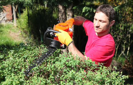 jardinier, pépiniériste, paysagiste taille un arbuste