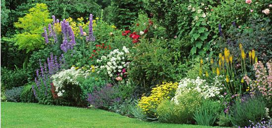 Royan devis travaux royan 17200 for Plantes vivaces pour jardin anglais
